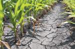 Aproape 49.000 de hectare calamitate, pagube de peste 372 miliarde lei vechi!