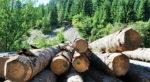 S-au dublat defrisãrile ilegale din pãdurile Vasluiului