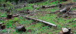 Hotii de lemne vor rãmâne fãrã obiectul muncii